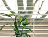 Why should You have Outdoor Blinds in Your House?